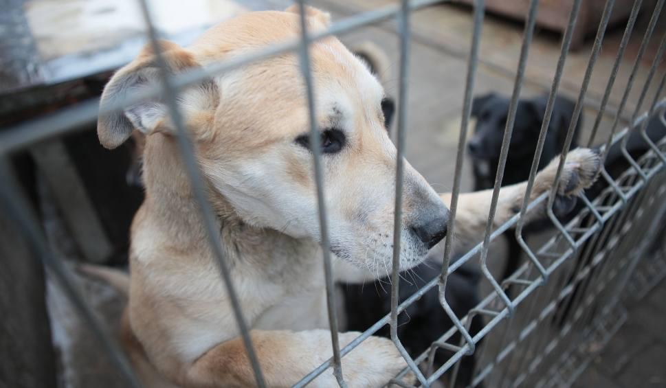 Film do artykułu: Schroniska w Łódzkiem. Płacą tysiąc zł za adopcję psa. Chętnych brak
