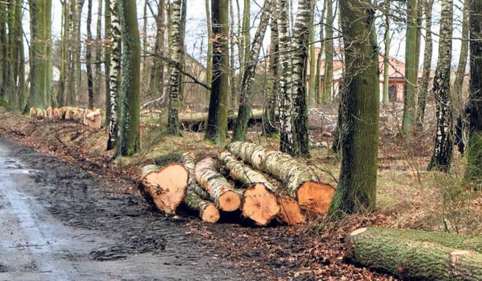 Film do artykułu: Padły drzewa pod S6 w Budzistowie pod Kołobrzegiem