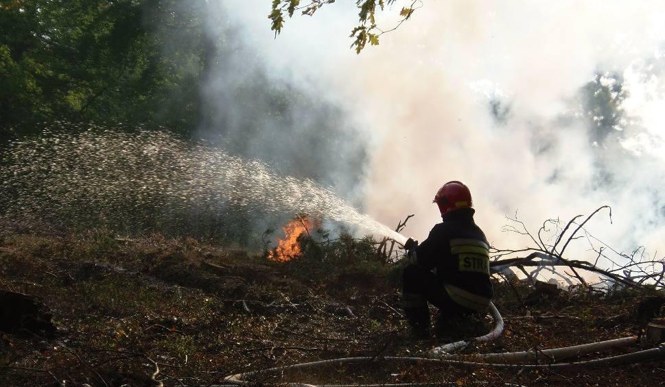 Film do artykułu: Ktoś podpala lasy wokół Szubina - nadleśniczy wyznaczył nagrodę