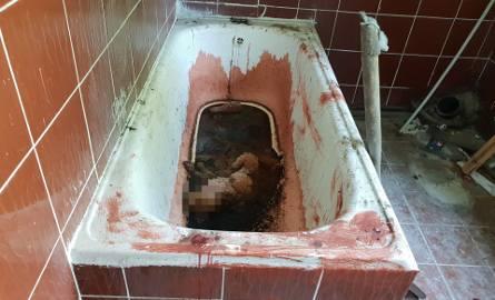 Zmasakrowany kot w wannie pełnej krwi. I napis 666 [DRASTYCZNE ZDJĘCIA]