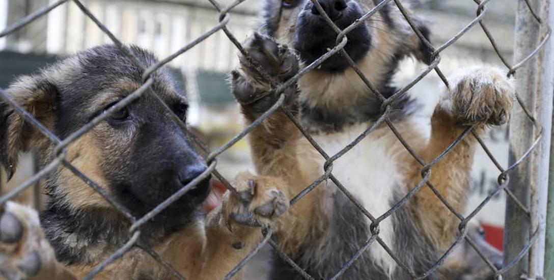 Miasto znajdzie środki na kastrację zwierząt? Ma być taki program