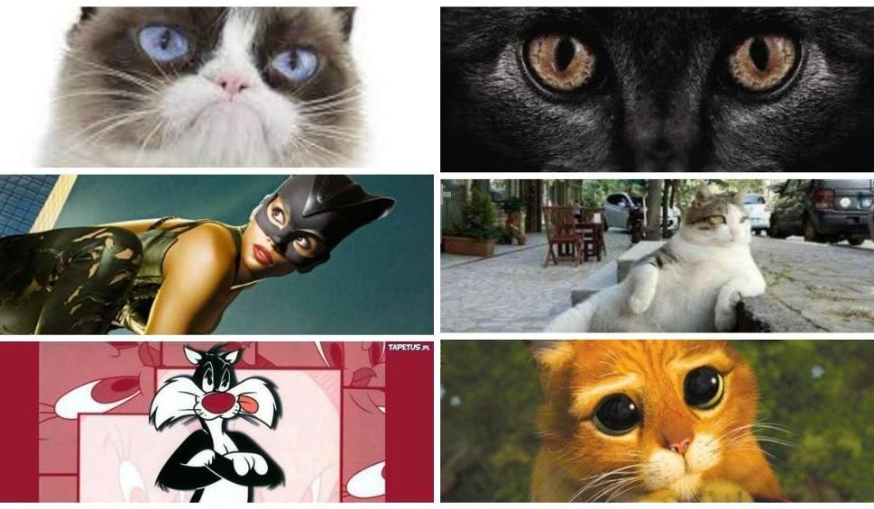 Film do artykułu: Dzień kota. Najbardziej znane koty na świecie!