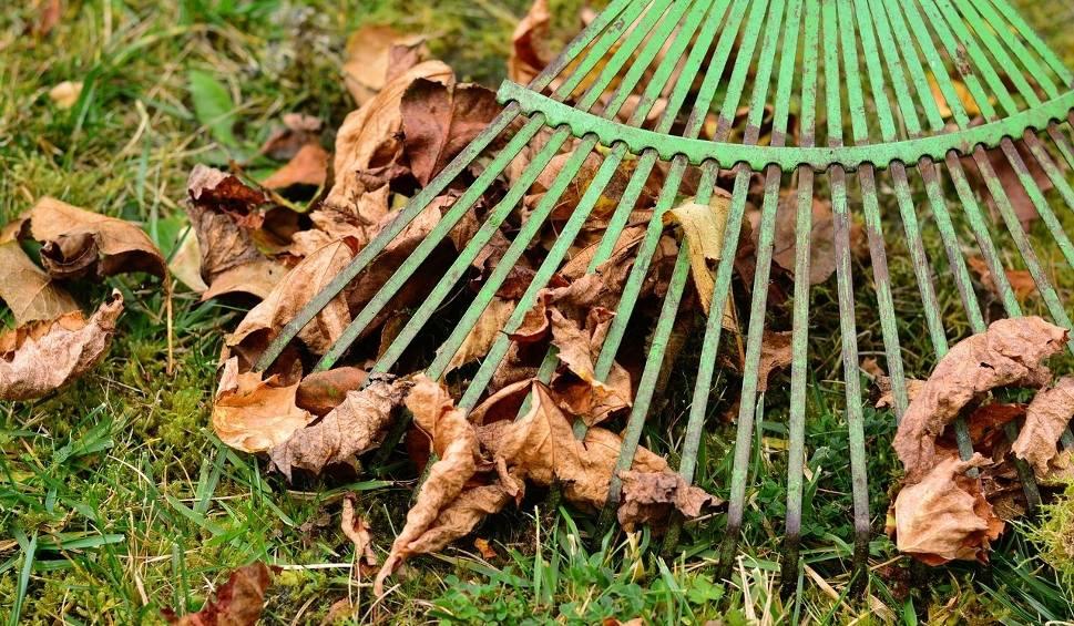 Film do artykułu: Jesienne prace w ogrodzie. Pamiętaj o zebraniu liści i koszeniu trawy [wideo]