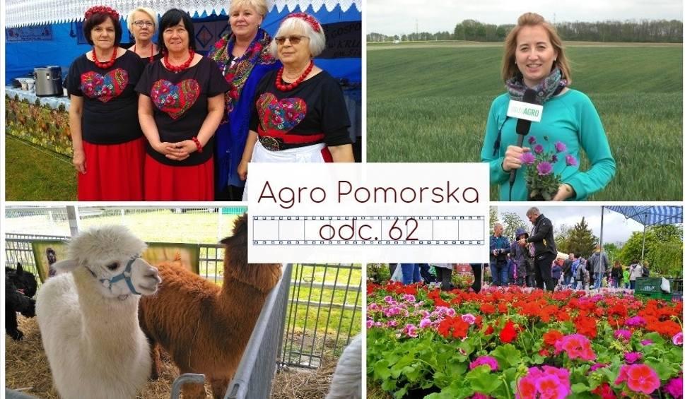 Film do artykułu: Agro Pomorska odc. 62. Relacja z targów Lato na Wsi w Minikowie [wideo]