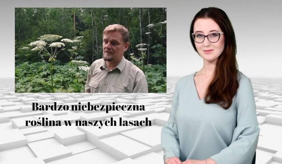 Film do artykułu: Bardzo niebezpieczna roślina w naszych lasach! [WIADOMOŚCI]