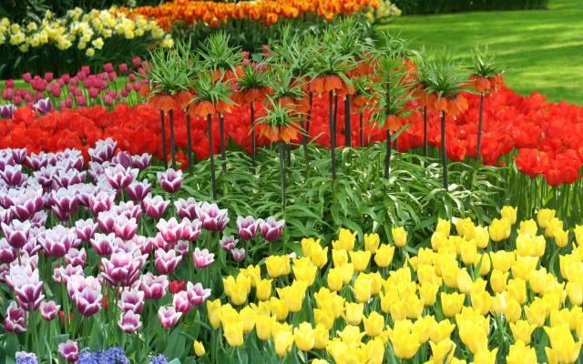 W zależności od koloru tulipany mają różne znaczenie. Na przykład żółte tulipany oznaczają radość, czerwone doskonałą miłość, a pomarańczowe moc, entuzjazm,