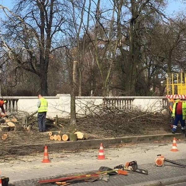 Pod koniec lutego wycięto cztery dorodne drzewa przed wejściem do parku Wilsona w Poznaniu - od ul. Głogowskiej.Przejdź do kolejnego zdjęcia ---&amp
