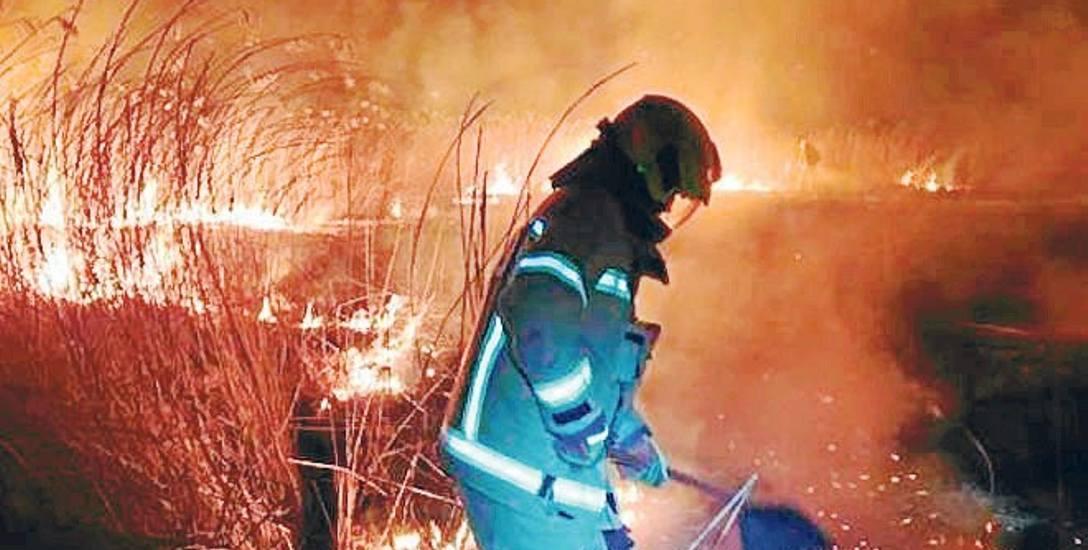 W sobotę wieczorem strażacy ze Złocieńca gasili pożary  trzcin  i traw