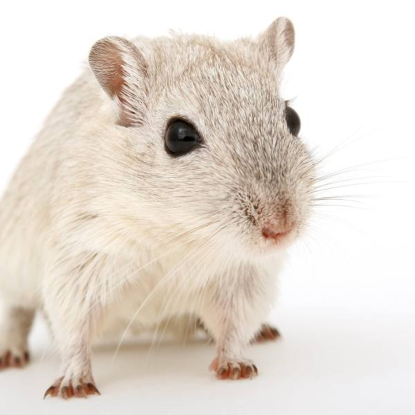 """Mysz w Biedronce biegała wśród pieczywa. """"To żywy Słodziak!"""""""