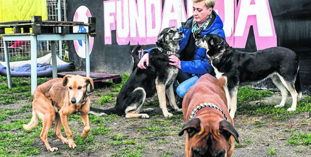 Pewnego razu kilkoro nastolatków postanowiło upiększyć psom ogród. Tak powstał mural z nazwą fundacji. Potrzebni są też wolonatrariusze, którzy pomogliby