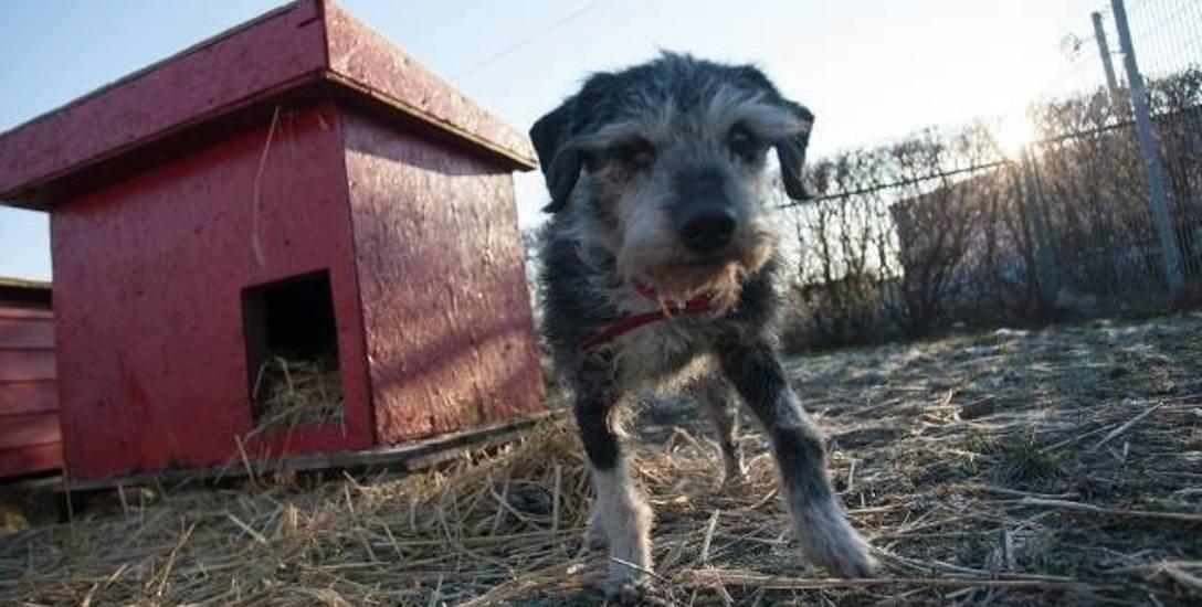 Wolontariusze obawiają się nowego schroniska dla zwierząt w Słupsku