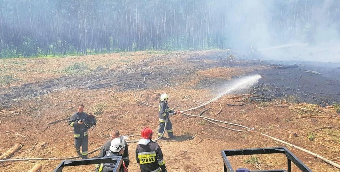 Spalił się hektar  młodego lasu