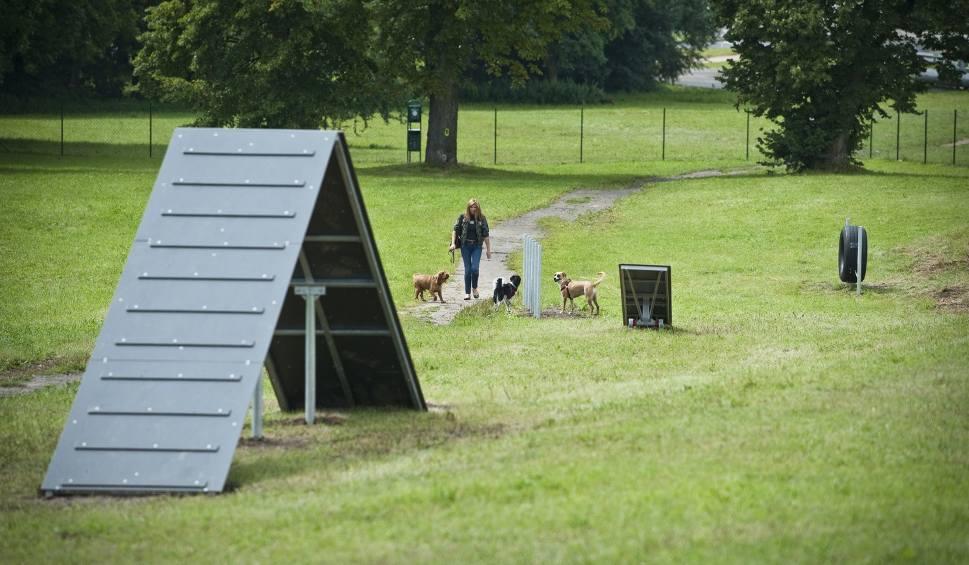 Film do artykułu: Psi wybieg do poprawki. Właściciele psów mają sporo uwag