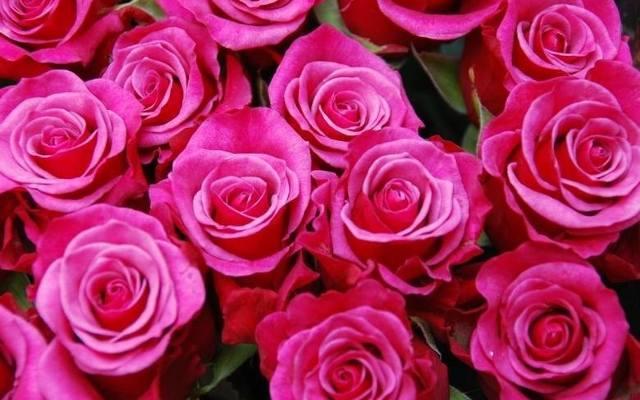 Dzień Matki życzenia Sms Nowiny24pl