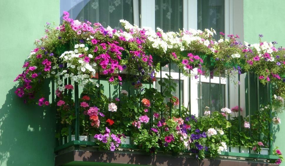 Kwiaty Na Balkonie W Bloku