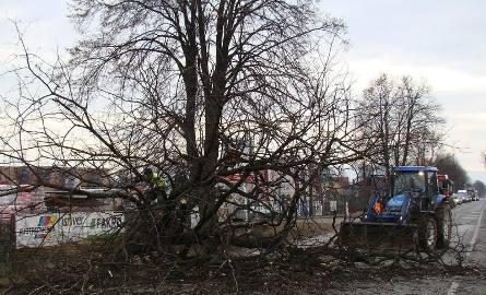 Trwa wycinka drzew wzdłuż tras wojewódzkich 948 i 949 w powiecie oświęcimskim