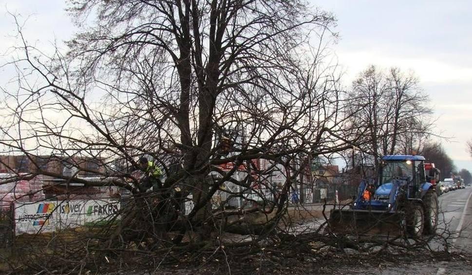 Film do artykułu: Trwa wycinka drzew wzdłuż tras wojewódzkich 948 i 949 w powiecie oświęcimskim