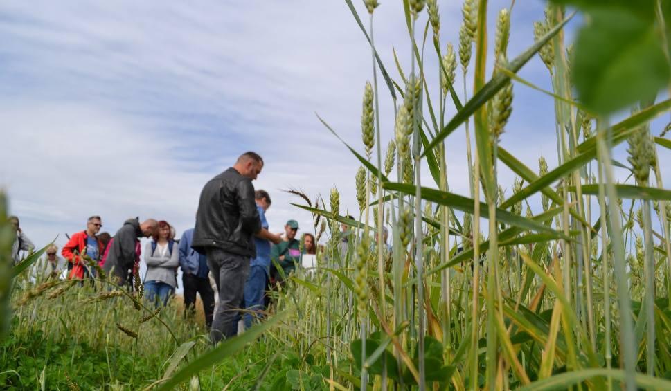 Film do artykułu: Ekologiczne rolnictwo - praca w zgodzie z naturą. Tak powstaje żywność wysokiej jakości. Z certyfikatami