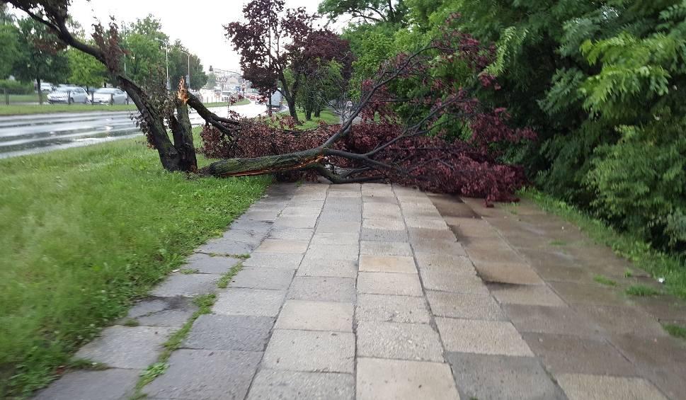 Film do artykułu: Burza przeszła nad Świętokrzyskiem. Drzewo upadło na chodnik