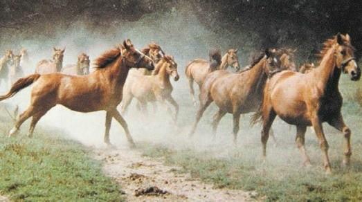 Tak wyglądały konie ze stadniny, która działała w Strzelcach Opolskich.
