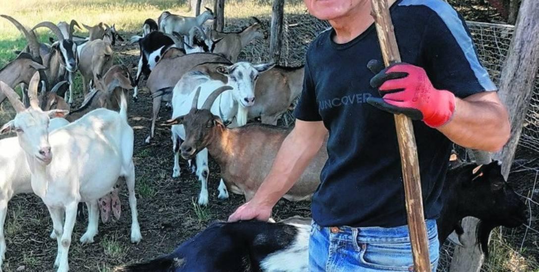 Bogdan Grajewski: Koza nie jest głupia. Może trochę uparta
