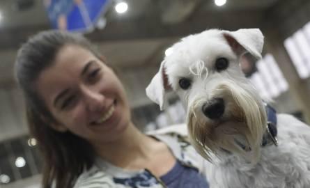 W sobotę i niedzielę na MTP pojawiły się psie piękności z całego świata. Przyciągnęła je Międzynarodowa Wystawa Psów Rasowych. Zobacz kolejne zdjęcie