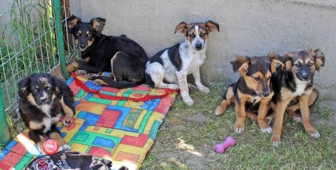 Szczeniaki czekają na prawdziwy dom. Dwa sympatyczne kundelki są już gotowe do adopcji