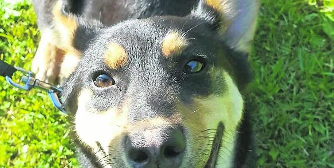 Pies z Ciemnic (gmina Dąbie) trafił pod dobrą opiekę. Jest teraz bezpieczny, bardzo ruchliwy i szczęśliwy.