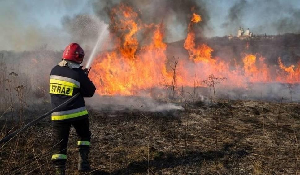 Film do artykułu: W okolicy Bydgoszczy już płonęły trawy. Grzywna w wysokości ceny niezłego auta - tak ma być karany festiwal głupoty