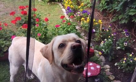 Schronisko w Kościerzynie chce pomalować 200 bud dla psów. Potrzebna jest pomoc