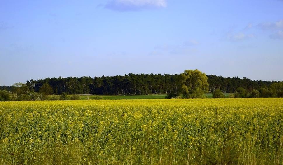 Film do artykułu: Dbamy o Opolskie. Cykl poświęcony ochronie środowiska w województwie