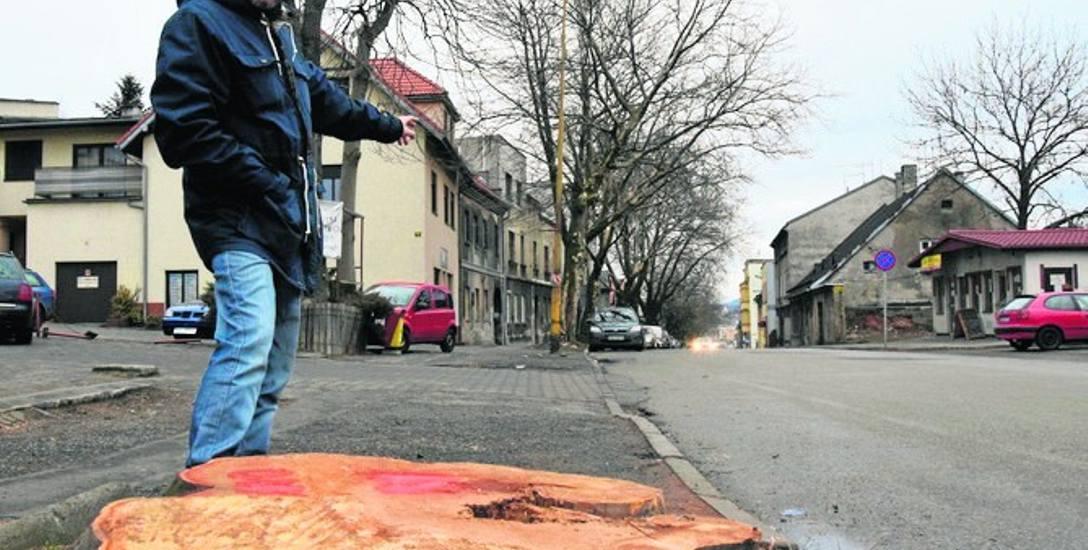 Piotr Cecerski w miejscu, gdzie wycięto już jedno z trzech drzew. Z krajobrazu ul. Cieszyńskiej zniknie ich w sumie siedem
