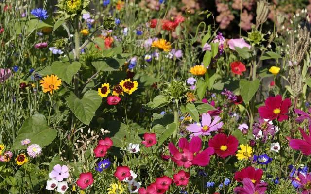 Ogród wiejski kocha kolory.