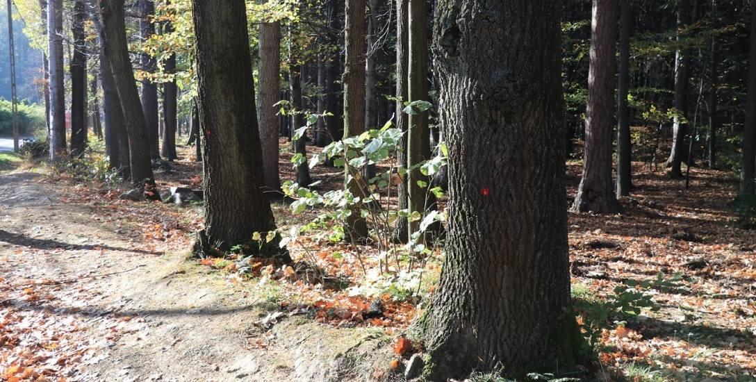 Mieszkańcy Olszówki apelują: Wyremontujcie ul. Pocztową, ale nie wycinajcie pięknych drzew!
