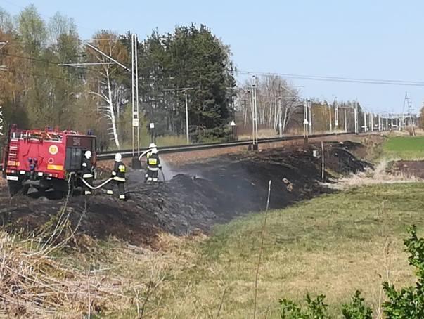 W akcji bierze udział ponad 20 zastępów straży pożarnej