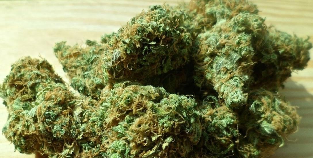 Trzydzieści dwa kilogramy narkotyków - policyjne podsumowania