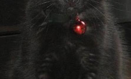 To jest Malutka, kotka Damiana.