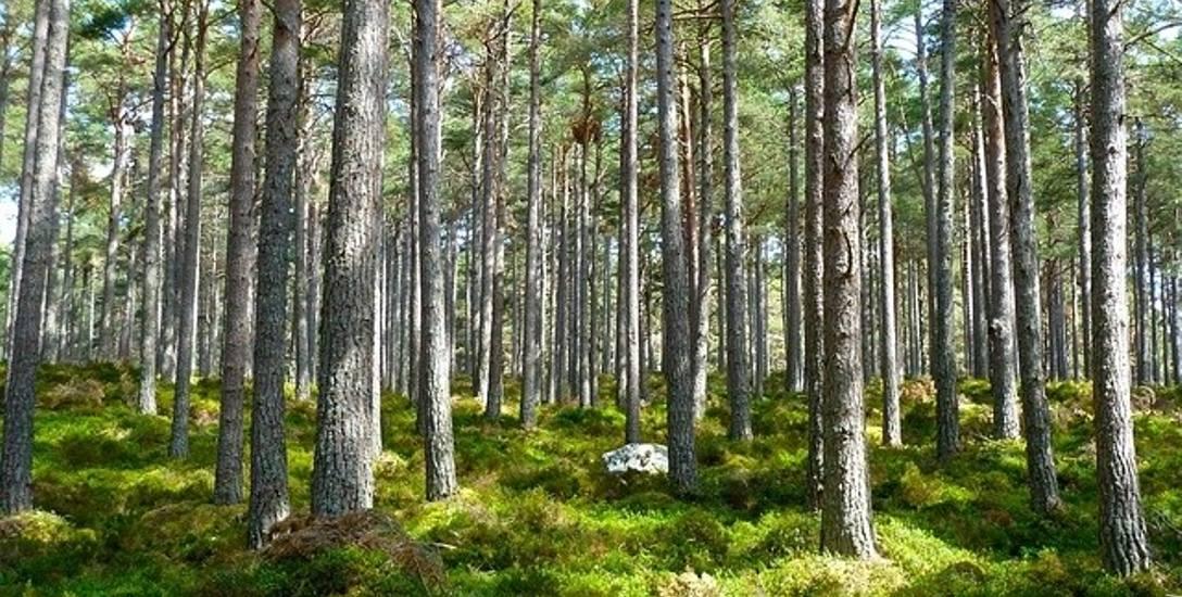 Pod okiem prezydenta Roberta Biedronia znikł las