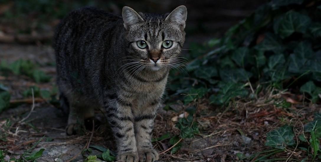 Wolno żyjącym kotom - zgodnie z ustawą - należy się pomoc. Otwieranie okienek dla wielu może być szansą na przetrwanie zimy. Apel w tej sprawie już wystosował