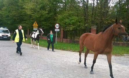 Wrocław: Konie biegały po ulicy. Uciekły właścicielowi