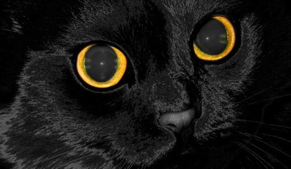 Sennik Prawdę Ci Powie Czarny Kot To Brak Miłości I Pieszczot