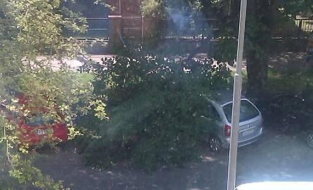 Samochód przygnieciony przez drzewo na ul. Monte Cassino