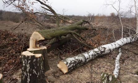 Wycinka drzew w Łodzi. Wykarczowano Górę Chachuły [ZDJĘCIA]