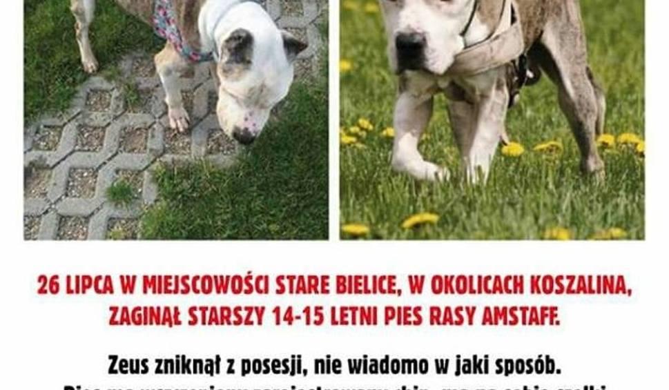 Film do artykułu: W Starych Bielicach zaginął pies. Rodzina prosi o pomoc