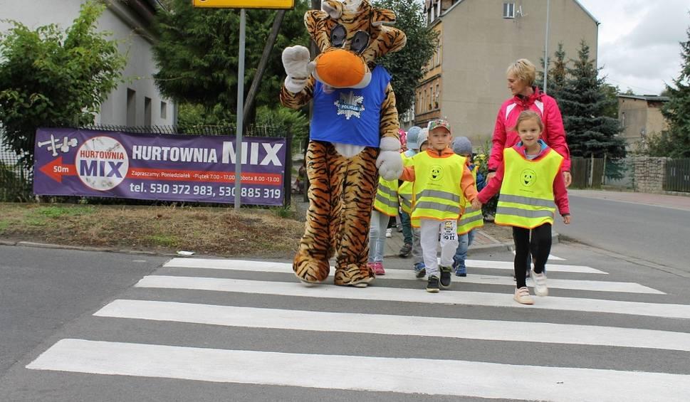 Film do artykułu: Tygrysek Lupo uczył dzieci przechodzenia przez jezdnię [ZDJĘCIA]