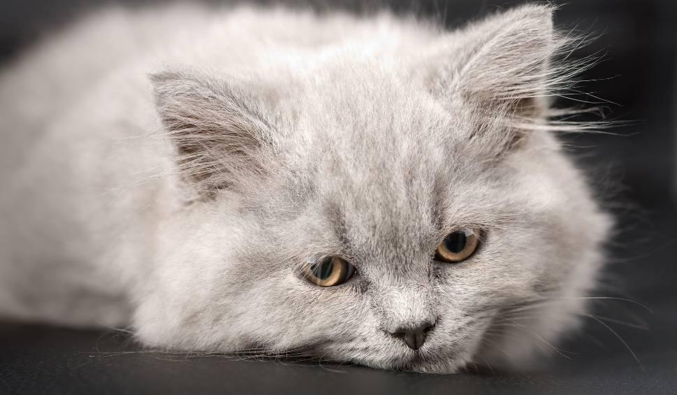 Film do artykułu: Pomóżmy kotom przetrwać zimę. Przynieś karmę do Galerii Echo w Kielcach