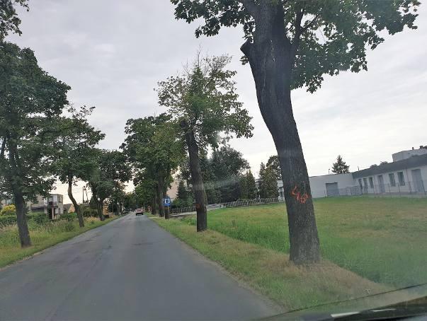 Oznakowane drzewa w gminie Turawa