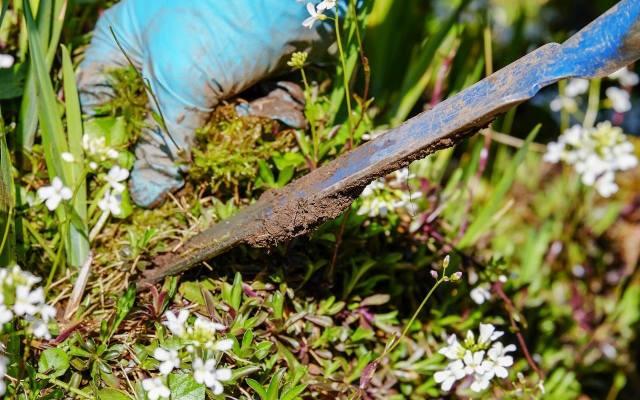 Mechaniczne usuwanie chwastów jest uciążliwą, ale skuteczną metodą na pozbycie się niechcianych roślin.
