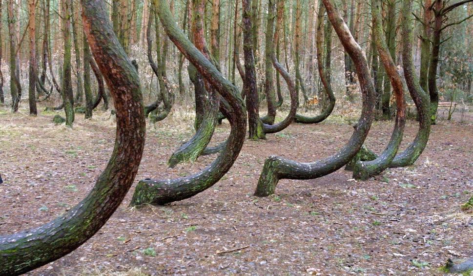 Film do artykułu: Krzywy Las pod Gryfinem zyska nowe, lepsze oblicze! Co się zmieni?