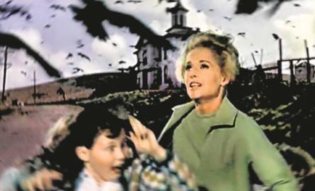 """Alfred Hitchcock nakręcił """"Ptaki"""" w 1963 roku"""